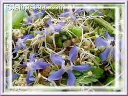 bourrache cuisine cuisine des fleurs recettes avec des fleurs cuisiner les fleurs et