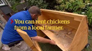 keeping backyard chickens cbc marketplace youtube