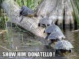Animal Meme - show him donatello animal meme