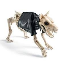 Halloween Skeleton Dog Decoration by Spike The Skeleton Dog Halloween Pinterest Hallows Eve And