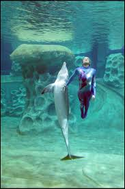 83 best dolphins images on pinterest dolphins dolphin jewelry