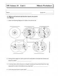 mitosis cell cycle diagram diagram collections wiring diagram