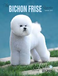 bichon frise dog breeders bichon back issues