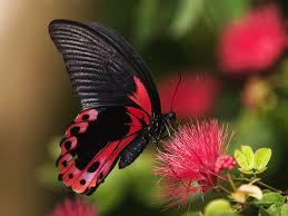 butterfly house wheeler farms