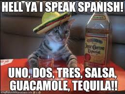 Speak Spanish Meme - spanish cat imgflip
