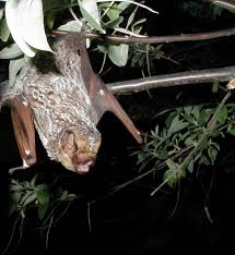 decades of bat observations reveal uptick in new causes of mass