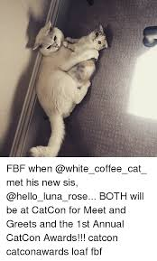 Fbf Meme - 穴 fbf when met his new sis both will be at catcon for meet and