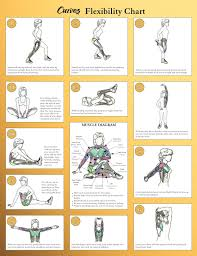 Home Gym Design Download Flexibility Workouts For Beginners Sport Fatare