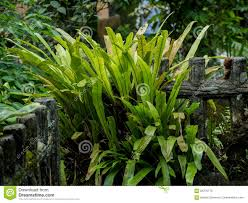 fence plants and tropical plant at the backyard stock photo