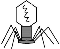 viruses notes