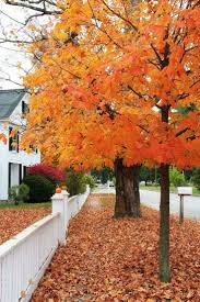 Fall Autumn by 382 Best Fall Favorites Images On Pinterest Fall Autumn Fall