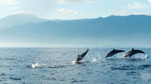 dolphin watching cruise klook