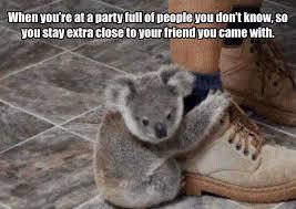 High Koala Meme - high koala meme koalas pinterest 100 images koala bear memes
