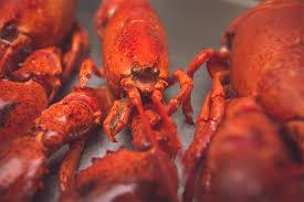 nauset fish u0026 lobster pool young u0027s fish market u0026 sir cricket u0027s