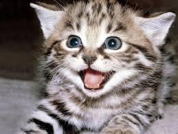 Imagenes De Gatitos Sin Frases | frases para amantes de los gatos i mascot house