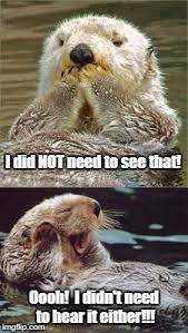 Sea Otter Meme - image tagged in tmi otter sea otter funny animals funny otter seen