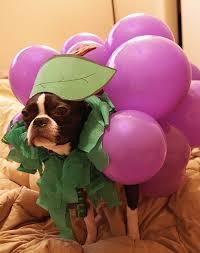 Human Dog Halloween Costumes 190 Pet Costumes Images Pet Costumes Animals