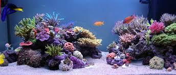 Nano Aquascaping Aquascaping Your Nano Reef Saltwater Conversion