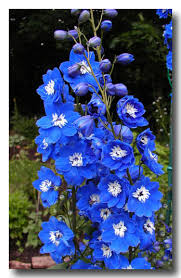 Blue Flower Vine - my elysian fields of blue