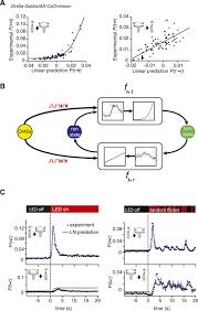 reverse correlation analysis of navigation dynamics in drosophila