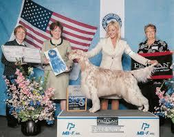 yarrow affenpinscher dog show 2014 06 22