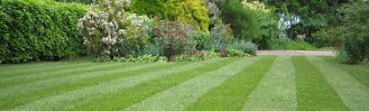 the best grass seed and growing tips for a green lawn