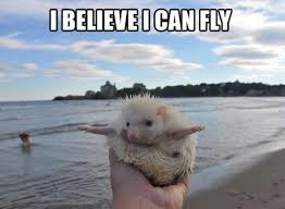I Believe I Can Fly Meme - i believe i can fly jpegy what the internet was meant for