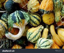 top view variety colorful ornamental gourds stock photo 469625840