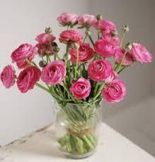 Discount Flowers Bulk Discount Flowers Pink Ranunculus