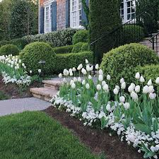 best 25 tulips garden ideas on pinterest spring flowers