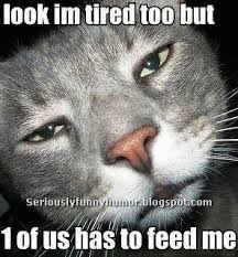 Sleepy Cat Meme - sleepy cat has to be fed seriously funny humor