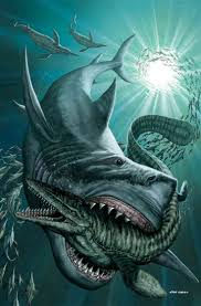 best 25 types of sharks ideas on pinterest sharks species of