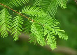 online buy wholesale bonsai indoor tree from china bonsai indoor