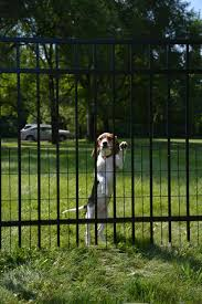 home depot and dog fence and black friday faq jerith aluminum fence