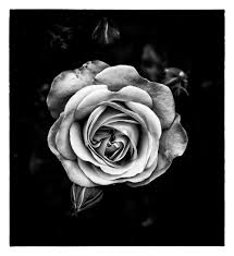 silver roses silver lise ulrich