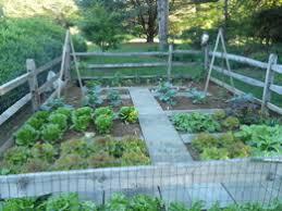 sunshine landscapes vegetable gardens organic vegetable