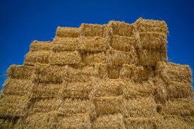 the hidden dangers of straw bale gardening the grow network