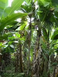 native plants in brazil gardening tips 4 you