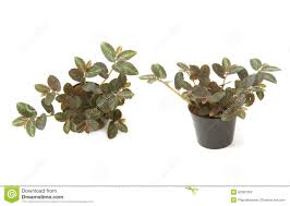 house plant potted plant front view and top view stock photo
