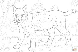 lynx in the forest coloring page free printable coloring pages