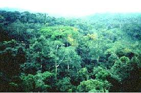 Plants In The Tropical Rain Forest - rainforest biomes