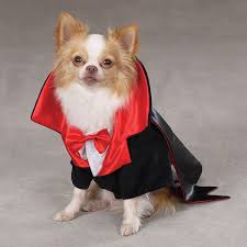 Chihuahua Halloween Costumes Dogs Cats Wearing Halloween Costumes Cats Dogs Halloween 12