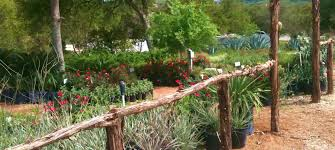 native texas plants landscaping region by region blog south texas growers