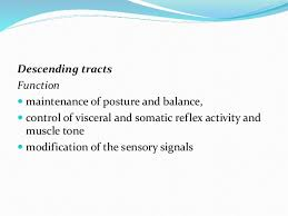 Visceral Somatic Reflex Anatomy Physiology Of Spinal Cord 7csf