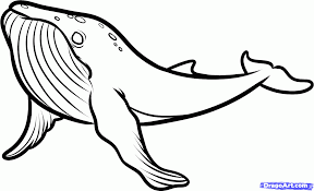 humpback whale drawing for kids