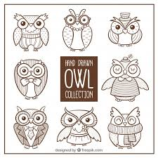 collection of owl sketches vector free download