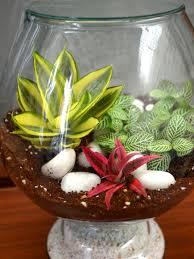 rain forest terrarium shop online for plants bangalore