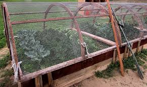 Advantage Of Raised Garden Beds - the advantages of raised bed gardening honeylove architecture