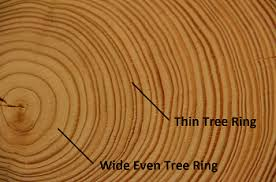 tree rings lesson for study
