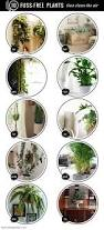 10 fuss free house plants that clean the air hello glow